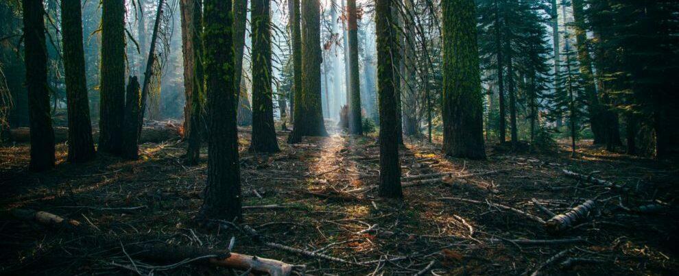 Si perde nei boschi, ritrovato a notte fonda: disavventura per un 75enne in Calabria