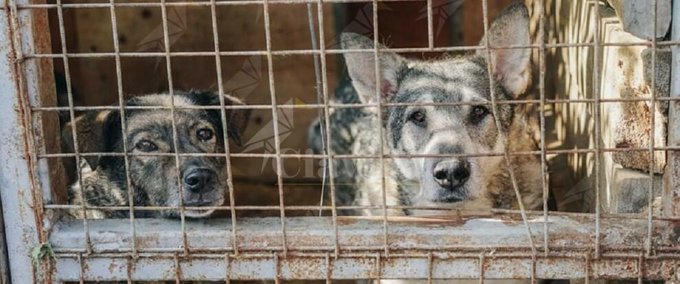 Scoperta truffa dei canili: sottratti all'adozione oltre 400 cani per un profitto di centinaia di migliaia di euro
