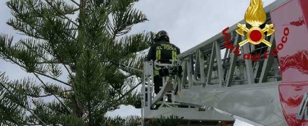 Tre gattini rimangono bloccati su un albero a Briatico, salvati dai vigili del fuoco