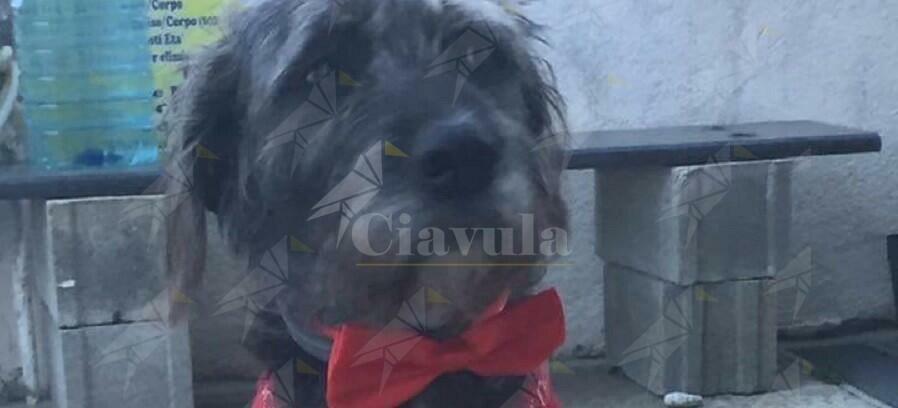 """Barbarie a Marina di Gioiosa. Animalisti denunciano: """"Cane legato, sparato a pallini e poi, agonizzante, finito a colpi di badile in testa"""""""