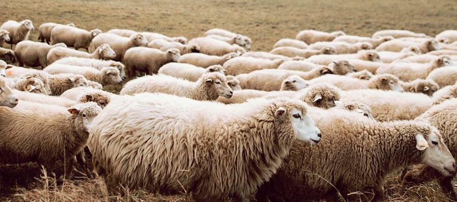 Jole Santelli pensa di governare un gregge ma i calabresi non sono pecore.