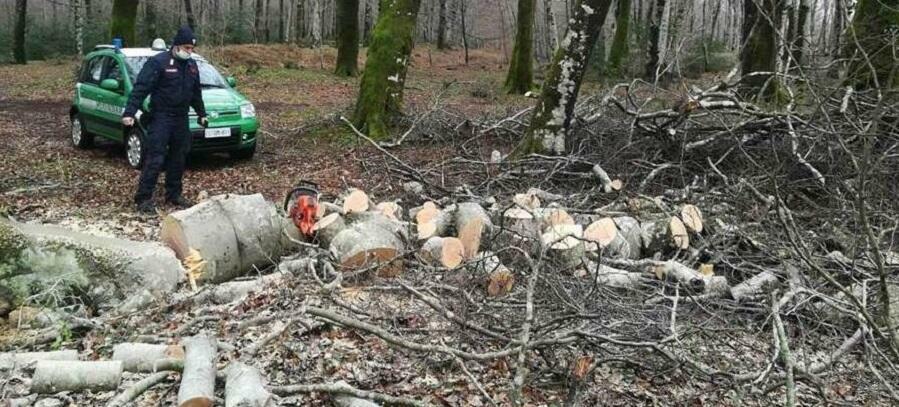 Fa legna nel Parco nazionale d'Aspromonte, denunciato per danneggiamento e violazione norme anti Covid-19