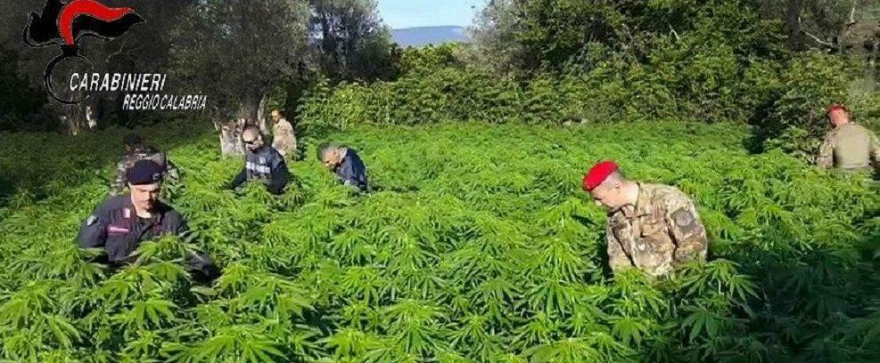 Coltivava marijuana a San Giovanni di Gerace, arrestato dai carabinieri di Caulonia