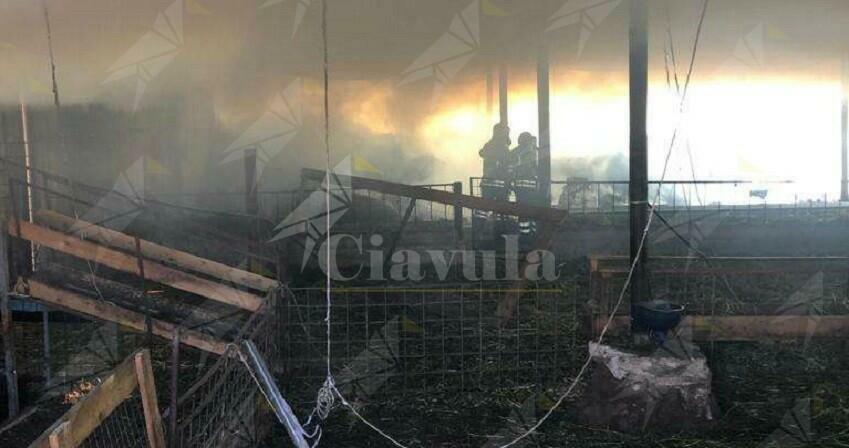 Incendio in stalla e fiamme. In corso le operazioni di spegnimento