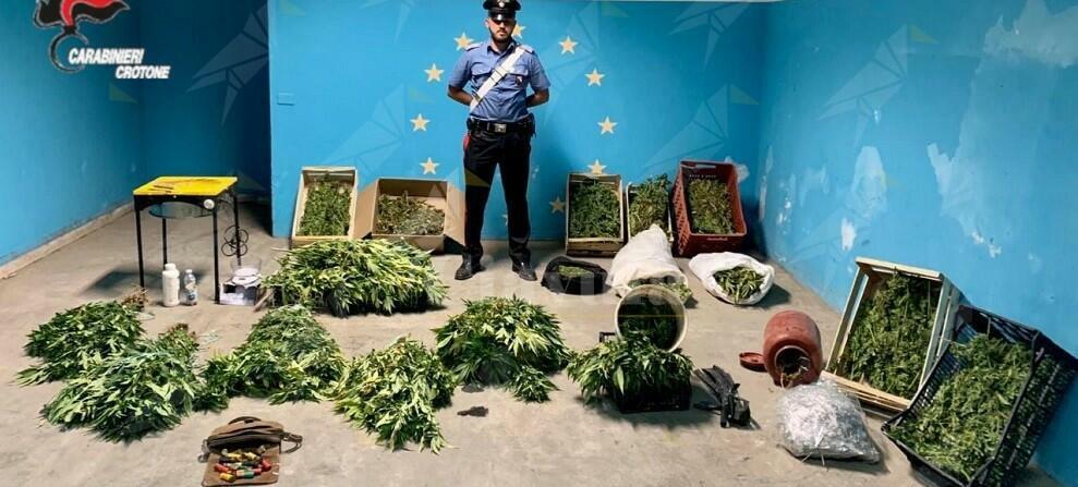 Calabria: sorpresi a raccogliere piante di canapa, tre arresti e una denuncia