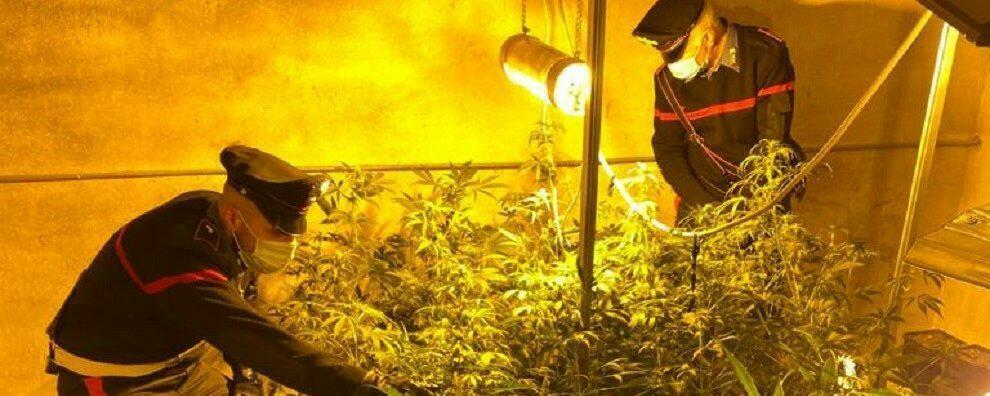 Scoperta una serra con oltre 30 piante di cannabis, arrestato un calabrese