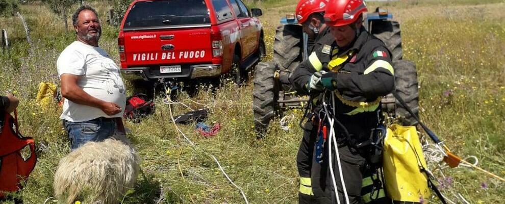 Cade da un dirupo di 60 metri, pecora salvata dai vigili del fuoco