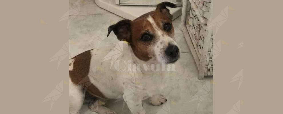 Scomparso cane a Grotteria mare, il proprietario offre ricompensa