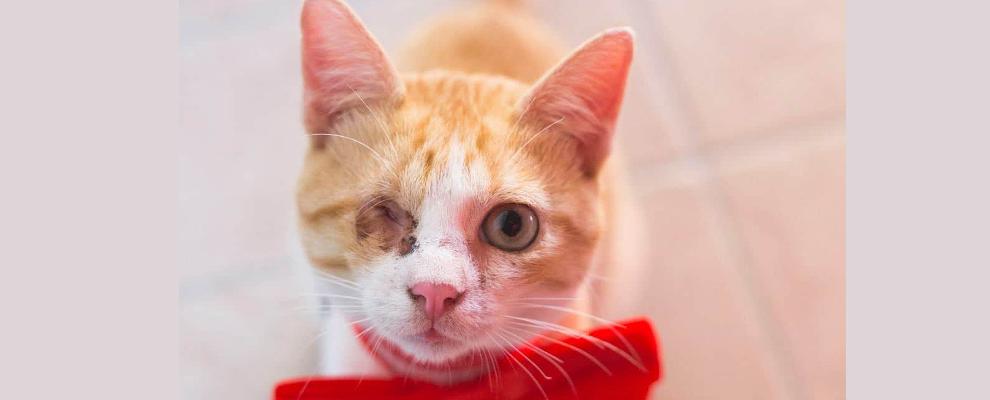 Smarrito un gattino a Gioiosa Ionica, l'appello dei proprietari