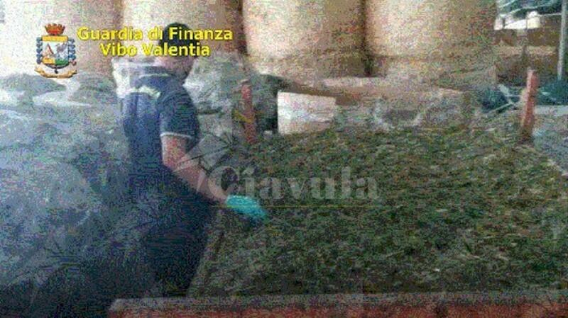 Calabria: Sequestrati 600 kg di marijuana e 5.200 piantine di canapa. Cinque persone in manette