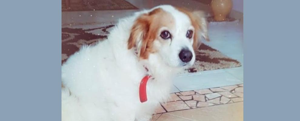 Smarrito un cane a Marina di Gioiosa Ionica. L'appello dei proprietari