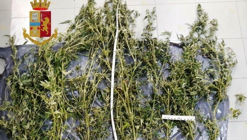 Coltiva 10 piante di marijuana sul terrazzo, denunciato