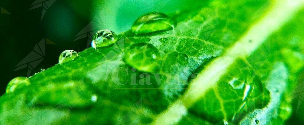 Caulonia: foto di un giorno di pioggia