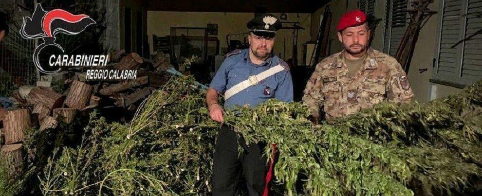 Droga, scoperta abitazione adibita ad essiccatoio nel reggino: due persone arrestate