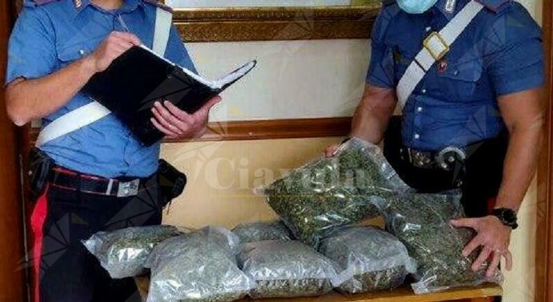 Scovata piantagione di marijuana in Calabria, tre persone in manette
