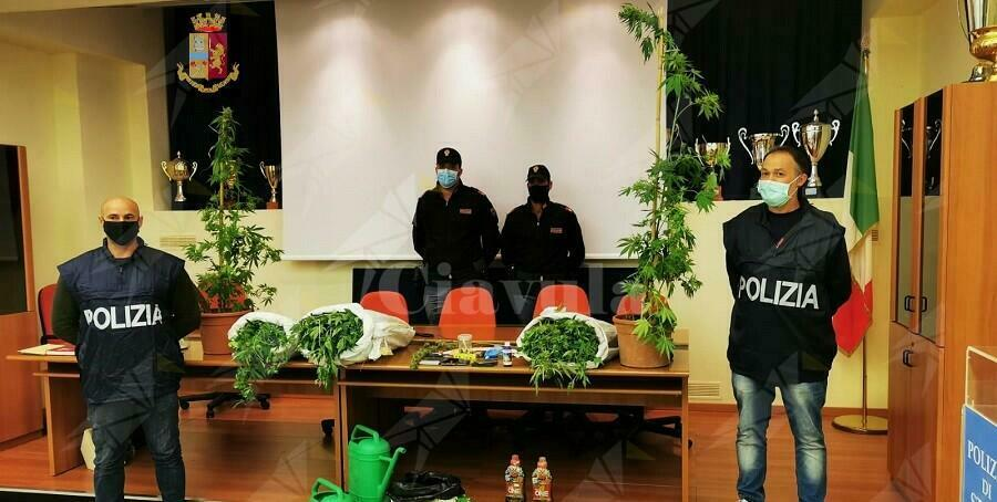 Militare dell'esercito italiano arrestato per coltivazione di marijuana