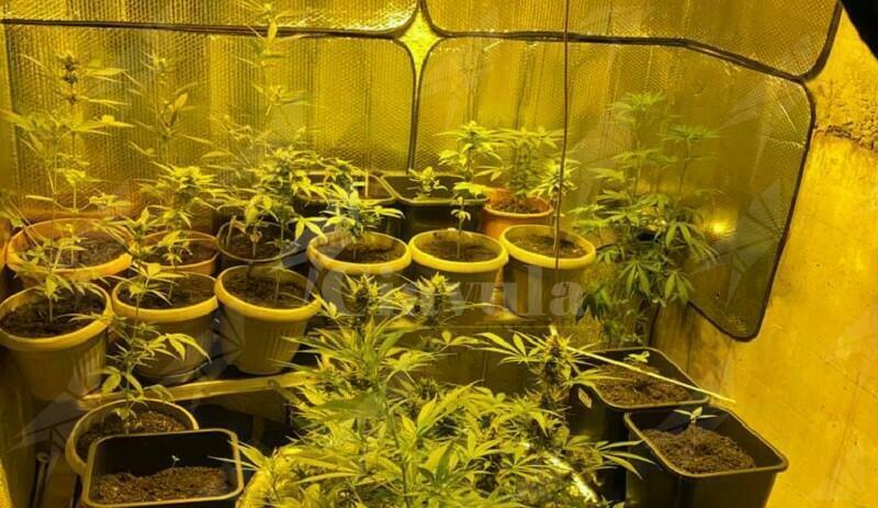 Coltivano marijuana in casa, in manette padre e figlio