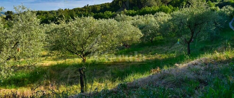 Sorpresi a rubare olive, arrestati