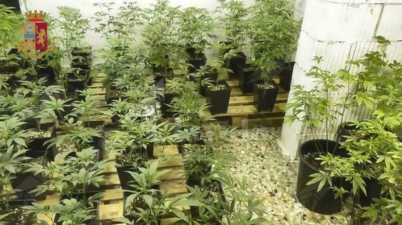 Detengono in casa 380 piante di marijuana e 39 mila euro in contanti. Tre persone in manette