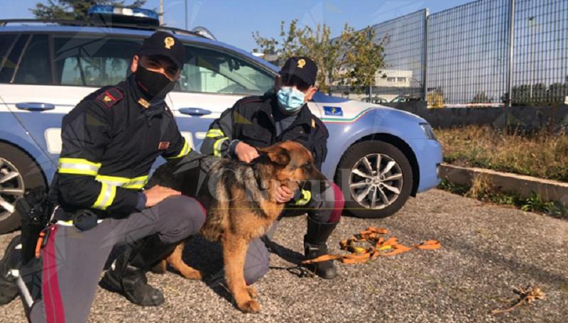 La polizia salva un cucciolo di pastore tedesco in autostrada