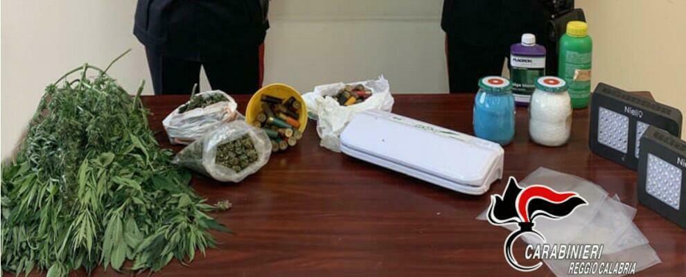 Gioiosa Ionica: l'odore di marijuana attira i Carabinieri. Arrestato un 25enne