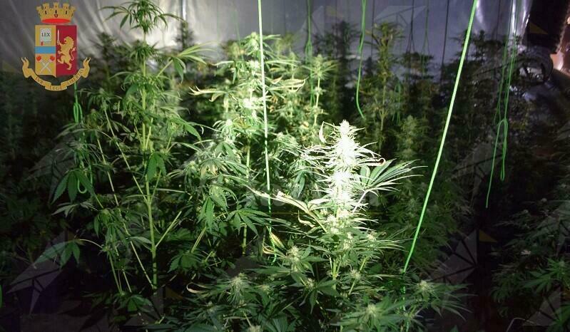 Coltiva 180 piantine di marijuana, 39enne in manette