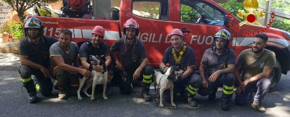 Calabria, due cani scomparsi da una settimana tratti in salvo dai vigili del fuoco