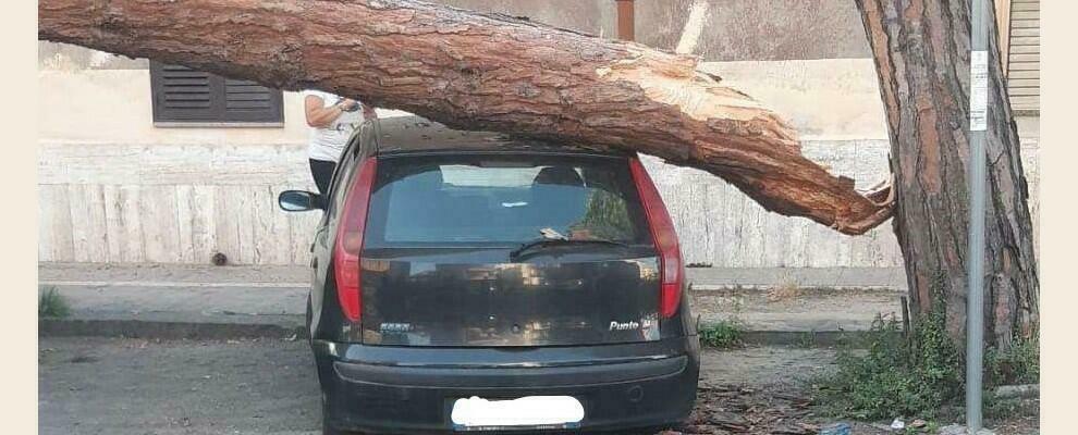 Paura nel vibonese: albero si spezza e cade su un'auto in sosta