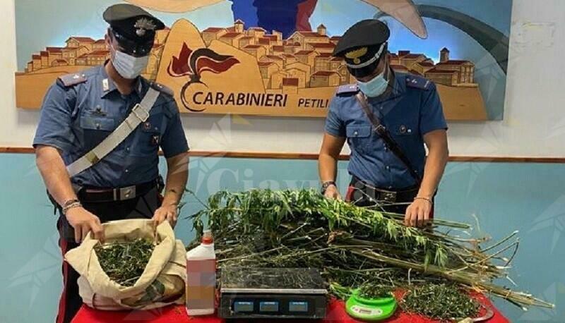 Calabria: Sorpreso dai carabinieri a coltivare una piantagione di marijuana, arrestato