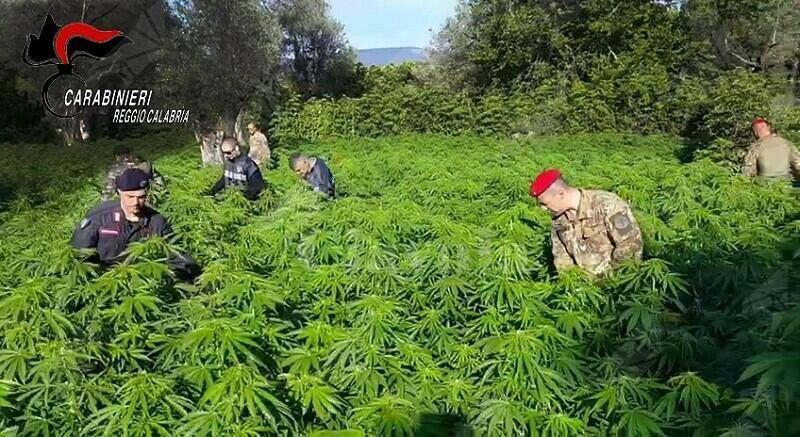 I carabinieri di Roccella Jonica individuano due piantagioni di cannabis a Placanica